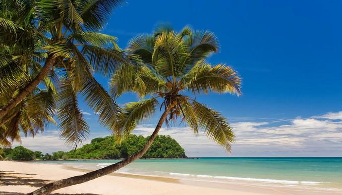 Кокосовая пальма - является мощным деревом, живёт более 100 лет