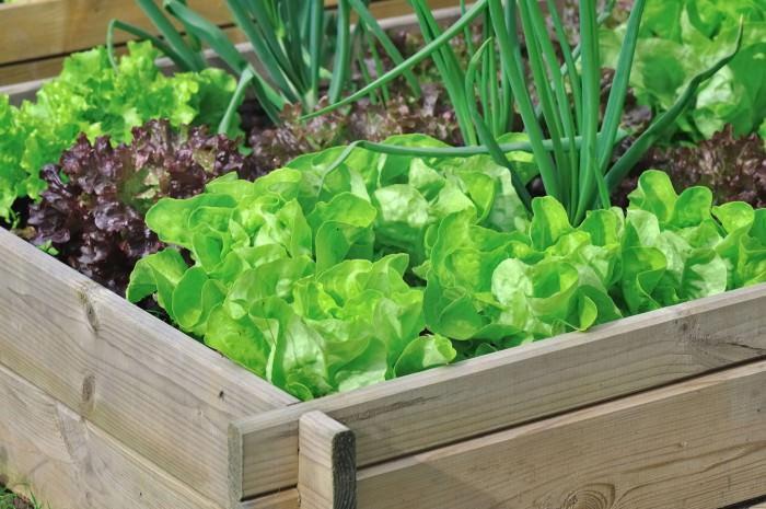 Вдоль дорожки, ведущей к дому или на фоне ограды можно расположить овощной миксбордер на высокой грядке