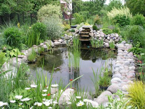 Создание и оформление естественного водоема на даче