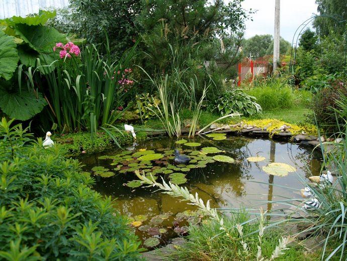На мелководье можно удачно сочетать декоративно-лиственные и декоративно-цветущие растения