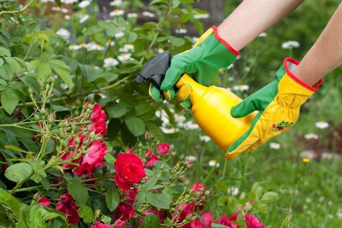 Садовые цветущие и декоративно-лиственные растения обрабатывают от черной и зеленой тли по мере необходимости с расходом 4,0 мл на литр воды комнатной температуры