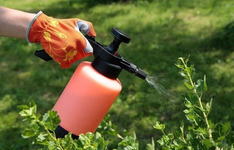 Рабочим раствором стандартного разведения опрыскивается тщательно вся надземная часть садовых и огородных растений