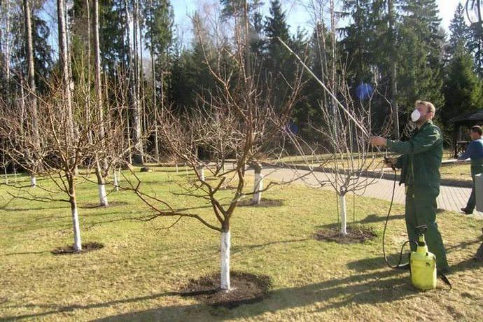 Обработка деревьев осуществляется в безветренный и, желательно, пасмурный день со строгим соблюдением дозировки Фуфафона