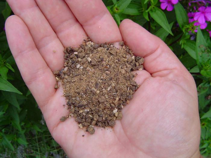 Для осенней подкормки жимолости используются калийные и фосфорные удобрения