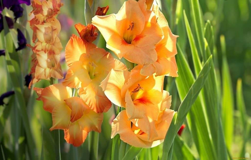 Готовить цветы к зиме начинают еще летом, в разгар их цветения