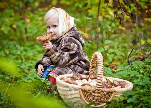 Определитель грибов позволяет собирать съедобные виды на территории Подмосковья