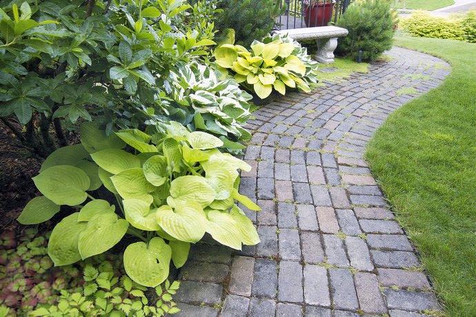 Разнообразие сортов хост позволяет удачно вписывать их в сады с самым разным дизайном