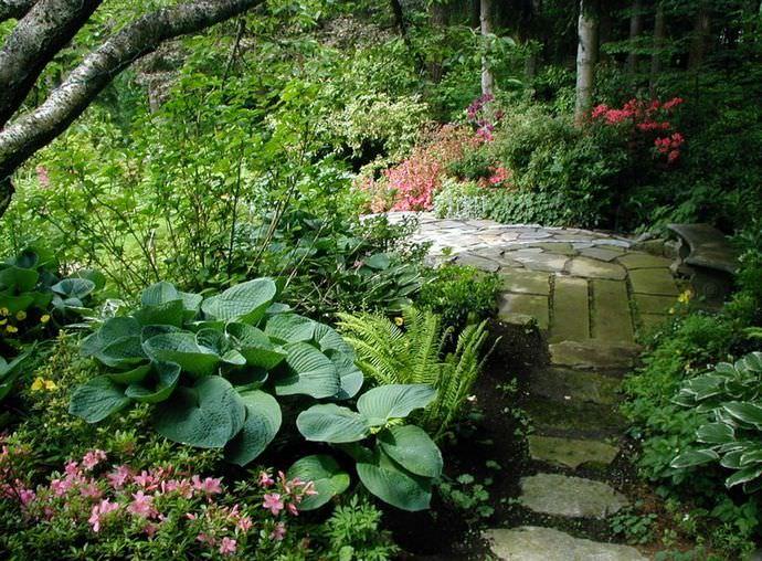 Хосты – довольно популярные растения, которые часто можно встретить в саду