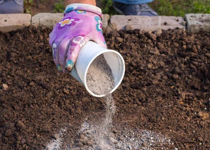 В осенний период опытные садоводы и огородники рекомендуют использовать доступный раскислитель в виде обычной древесной золы