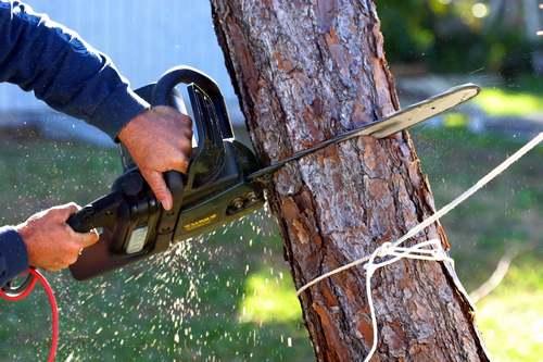 Достаточно часто возникает необходимость спилить дерево