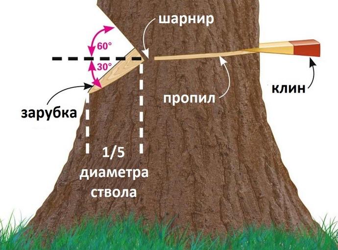 Валка деревьев в нужном направлении выполняется в период с ноября до середины декабря