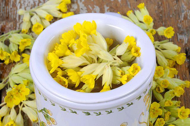 Цветки первоцвета собирают в самом начале цветения, срезая ножом все соцветие