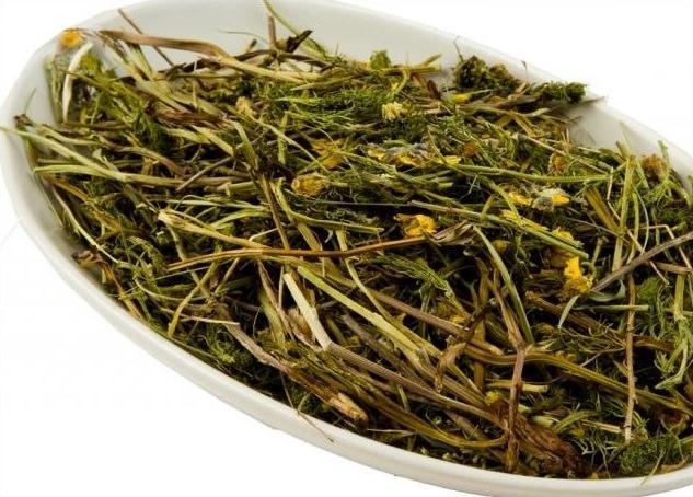 Благодаря своему химическому составу растение получило название первоцвета лекарственного