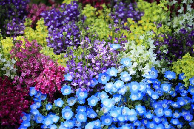 Львиный зев используется для создания цветочных композиций