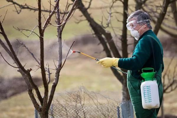 Первая обработка медным купоросом в ранний весенний период осуществляется с расходом 2-5 л на одно плодовое дерево