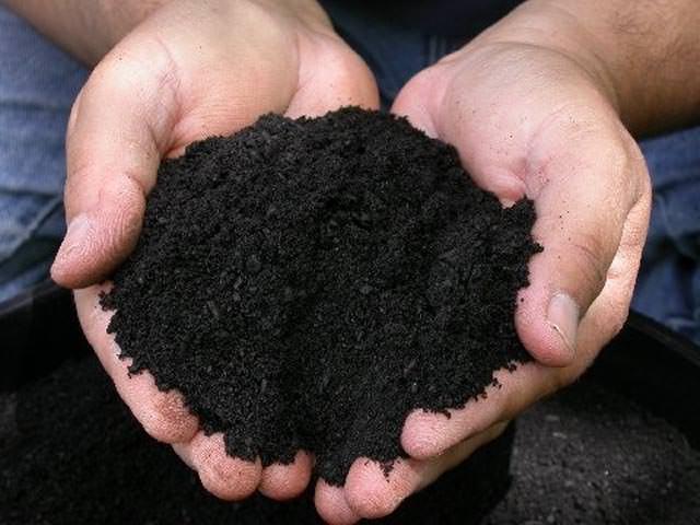 Чернозем требует внесения навоза или компоста из расчета полторы тонны на каждую сотку посадочной площади