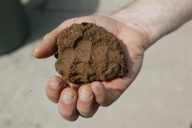 Глиняные и тяжелые земли нужно регулярно питать и улучшать их состав внесением любых удобрений органического происхождения