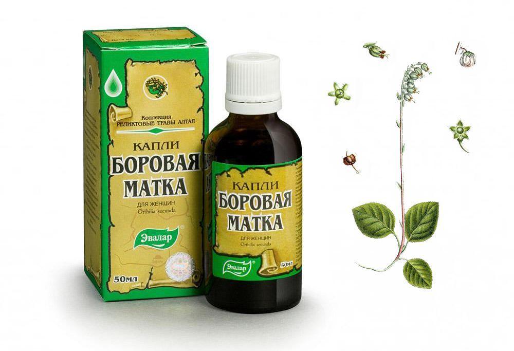 Флавоноиды и витамин С усиливают действие боровой матки, тем что укрепляют сосуды и способствуют выведению токсинов