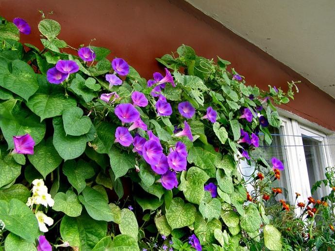 Особенно декоративны на дачах разноуровневого типа растительные композиции, которые удачно выделяются на фоне фасада зданий