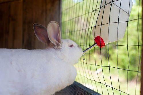 Поилки для кроликов: описание видов и особенности самостоятельного изготовления