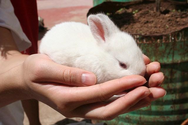 Для правильного развития и быстрого роста кроликам необходимо обеспечить хороший доступ к корму и воде