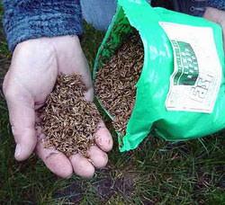 Чтобы вырастить очень красивый и долговечный зеленый покров своими руками, необходимо точно знать, как сажать газонную траву семенами