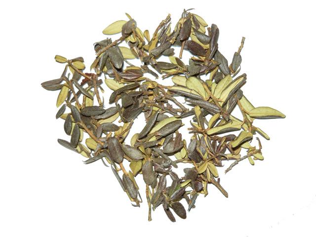 Рододендрон кавказский оказывает полезное воздействие на все ключевые системы органов благодаря своему богатому химическому составу