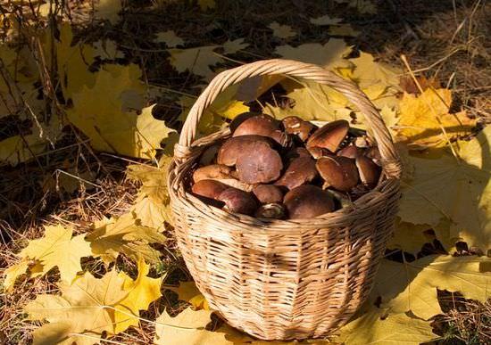 Сбор грибов – увлекательное и полезное занятие