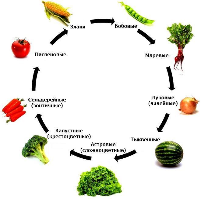 Правильное чередование растений на приусадебном и садово-огородном участке должно осуществляться согласно схеме