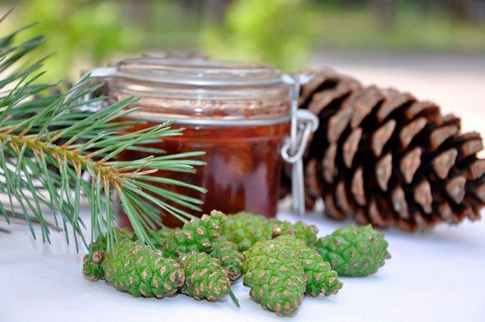 Специалисты рекомендуют употребление сосновых шишек через спиртовой раствор