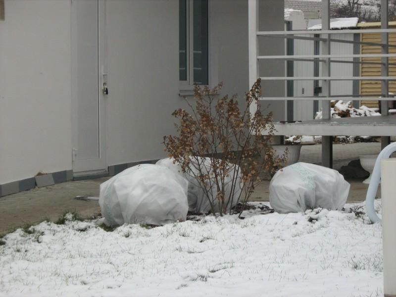 Подготовка к зиме вейгелы – целый комплекс мероприятий, который включает в себя обустройство качественного и надежного укрытия, которое предотвратит вымерзание растения