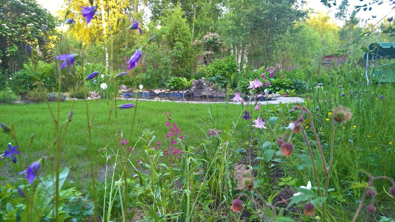 Спустя 3 года уже могу с гордостью похвастаться некоторыми уголками любимого сада