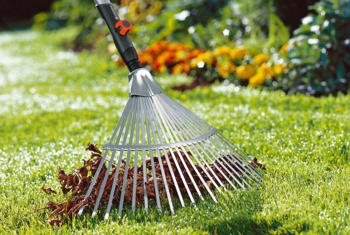 Вычесывать газонную поверхность рекомендуется веерными граблями или специальными механизированными средствами в двух взаимно перпендикулярных направлениях