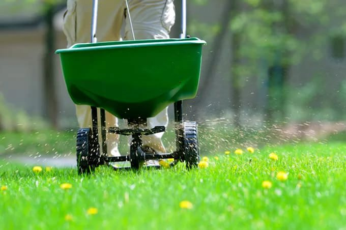 Газонная трава отличается высокой потребностью в дополнительных поверхностных подкормках