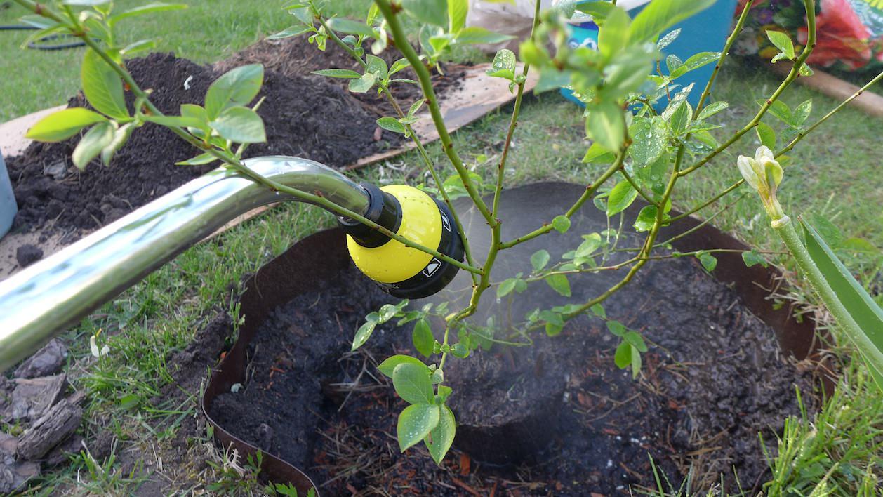 Осенью рекомендуется осуществлять обязательные влагозарядные поливы голубики
