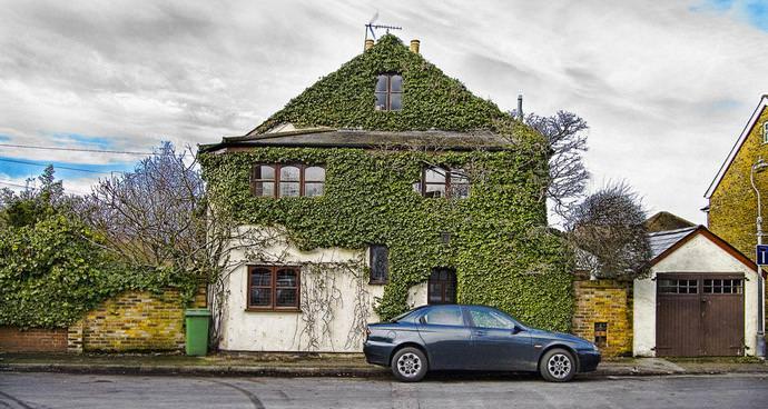 Одним из наиболее популярных направлений в дизайне современного интерьера и ландшафта выступает озеленение или создание растительного ковра на стене