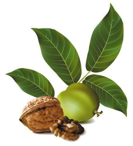 В листьях грецкого ореха содержиться большое количество полезных веществ