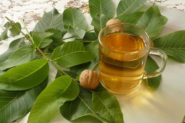 Благодаря таком богатому химическому составу веществ, присутствующих в листьях грецкого ореха, их уже давно применяют в народной медицине