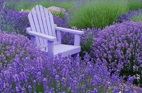 Низкорослые компактные цветы, красиво цветущие всё лето, – настоящее украшение уличной клумбы