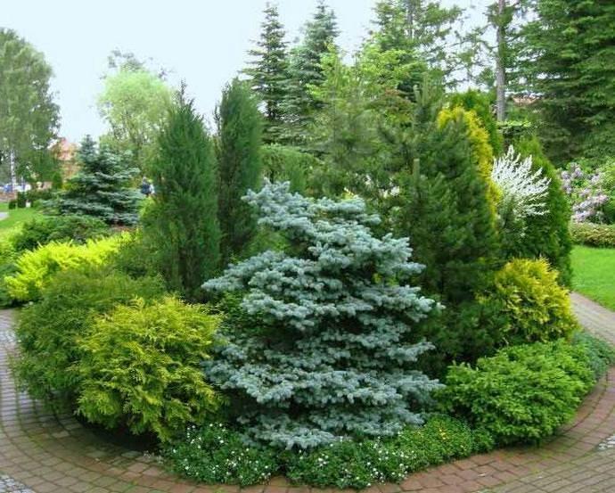 Хвойники-крупномеры, стелющиеся растения и кустарники могут использоваться при создании миксбордеров