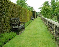 Живая изгородь использовалась в Великобритании еще 1000 лет назад