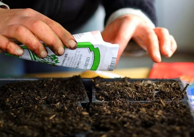 В марте проводятся основные посевные работы для получения рассады большинства огородных культур