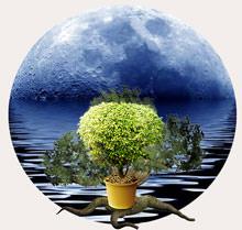 Лунный календарь посадок дает возможность понять, в какие даты и что предстоит делать