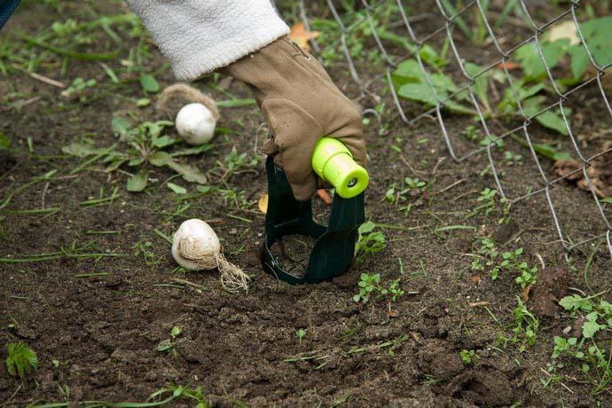 Для осеннего посева подходит последняя декада октября и первая декада ноября