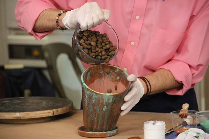 При пересадке каллы на дно необходимо уложить достаточно толстый слой керамзитной крошки или другого дренажа