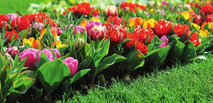 Весной активнее всего растут луковичные