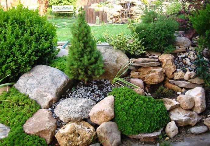 Дизайн альпинария предполагает правильный выбор растений и камней