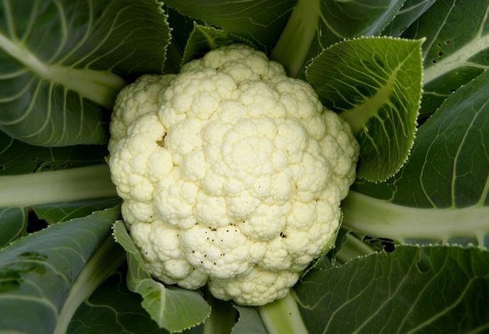 Головки цветной капусты крайне нежные, необычной формы, но имеют прекрасный вкус