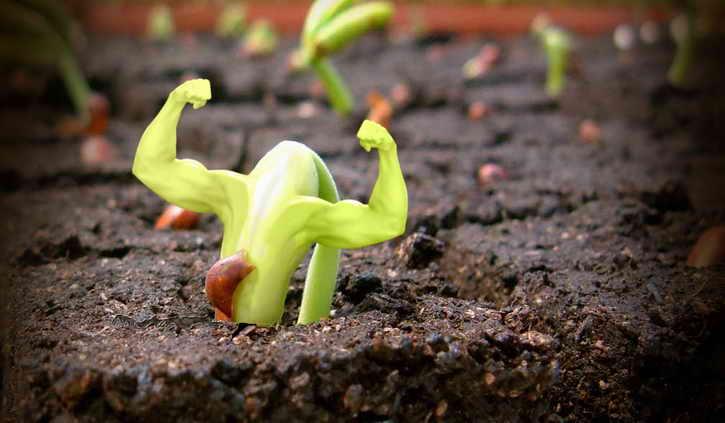 Под знаком Скорпион растения получают выносливость и жизненную силу