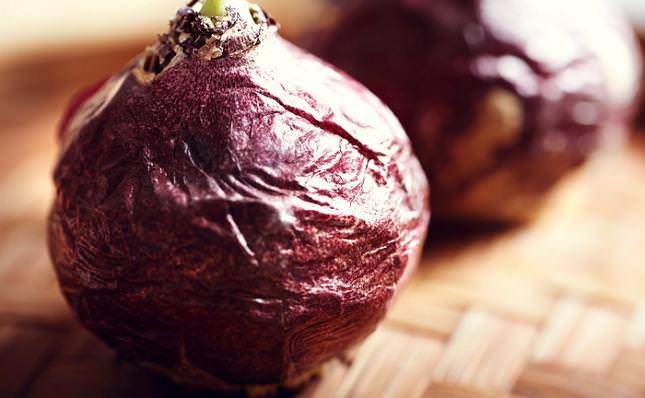 Если крупная луковица хорошо сохранилась и является достаточно тяжелой, то можно приступать к ее выращиванию в горшке